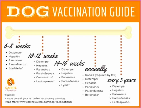 5 dog vaccination schedule chart 490375