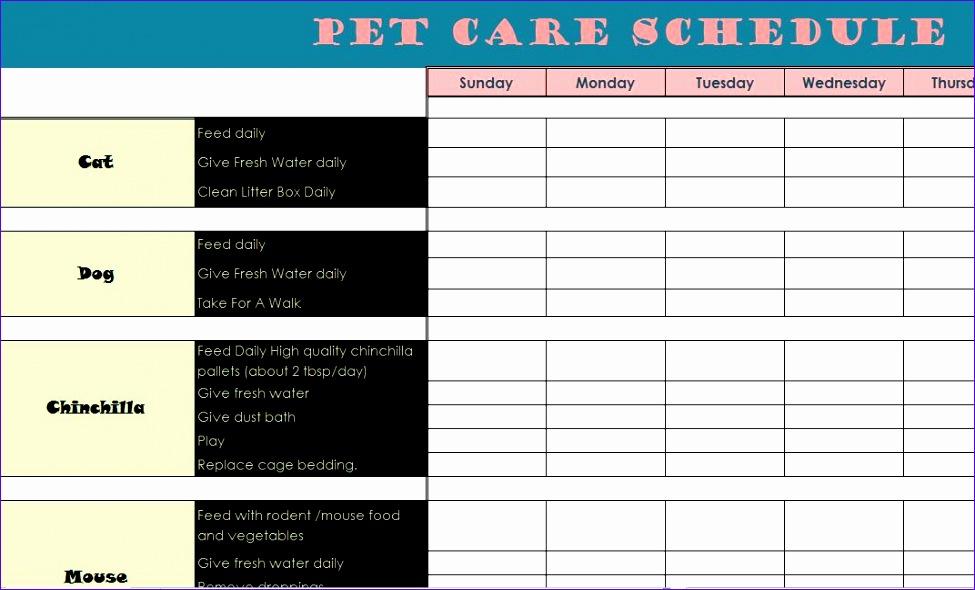 pet care schedule 975590