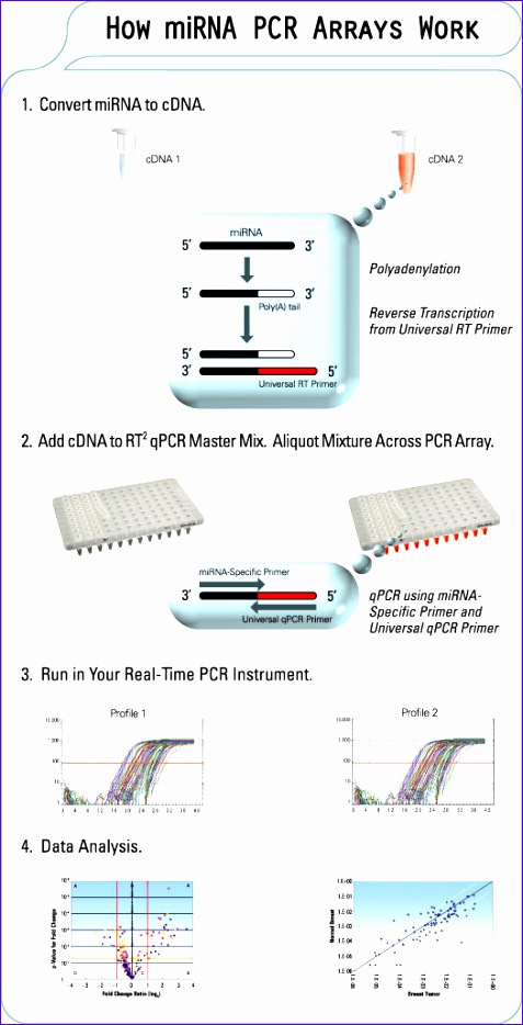 Cost Analysis Template Excel Jgzvk Unique How the Mirna Pcr Arrays Work 5251016