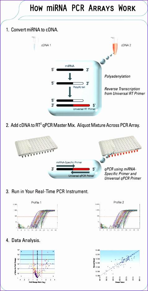 how mirna pcr arrays work 477934