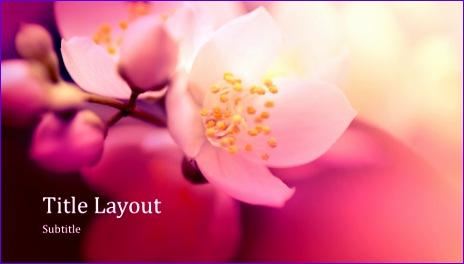 Cherry blossom nature presentation widescreen TM